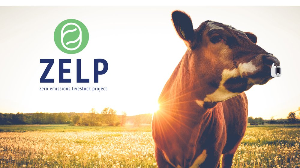 Zelp secures £830k Seed funding